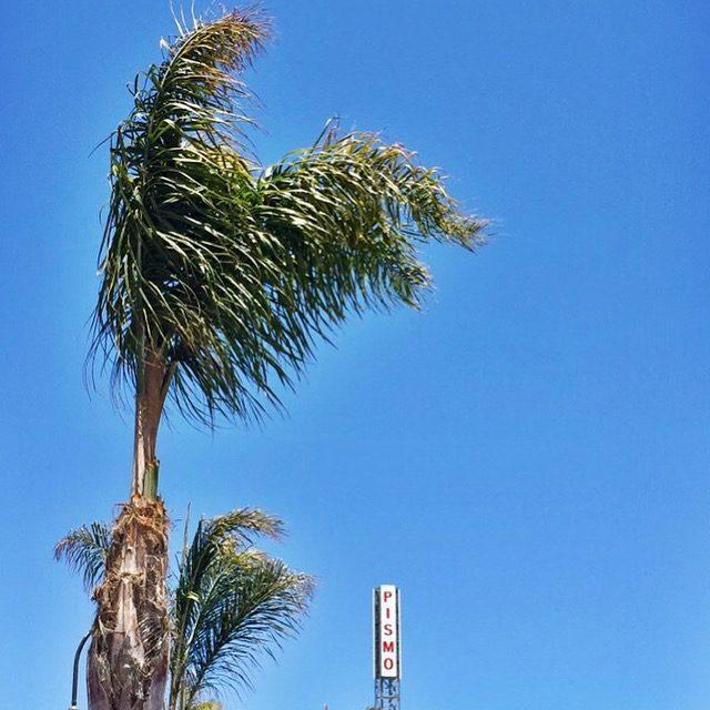 California Dreaming: Carmel